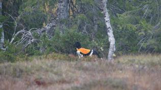Foto: Mari Mortensdatter-Kvamsø Lyså